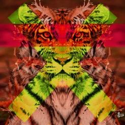Tiger-Law-web